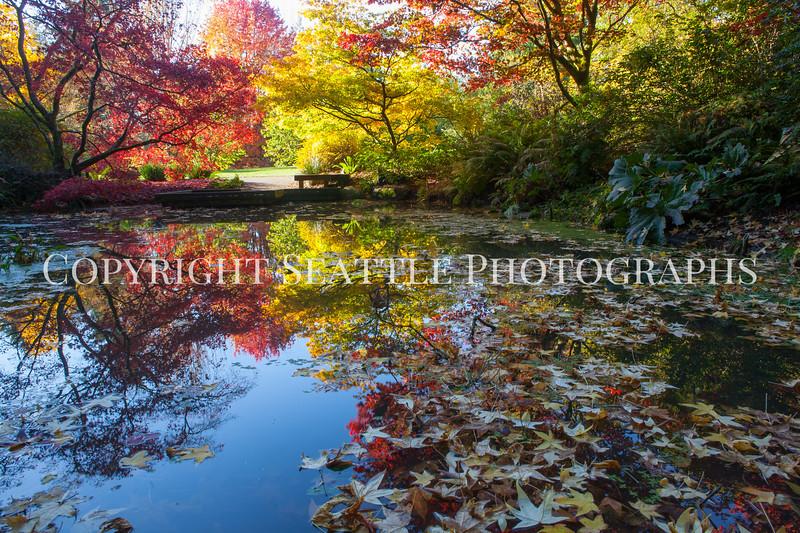 Arboretum Autumn 127