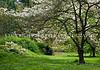 Arboretum Trees 6