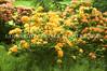 Arboretum Flowers 184