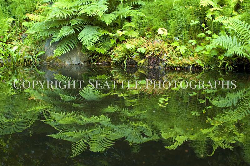 Arboretum Pond 177
