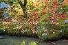 Japanese Garden Creek 6