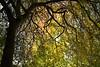 Arboretum Autumn 107