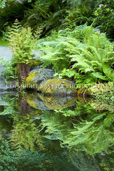 Arboretum Pond 179