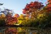 Arboretum Autumn 128