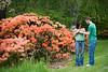 Arboretum Azalea Way 55