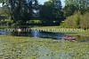 Arboretum Lake 101