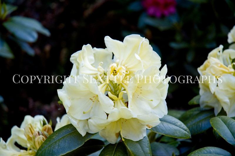Arboretum Flowers 7