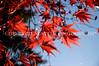 Arboretum Autumn 46