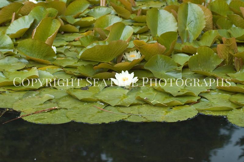 Arboretum Pond 212