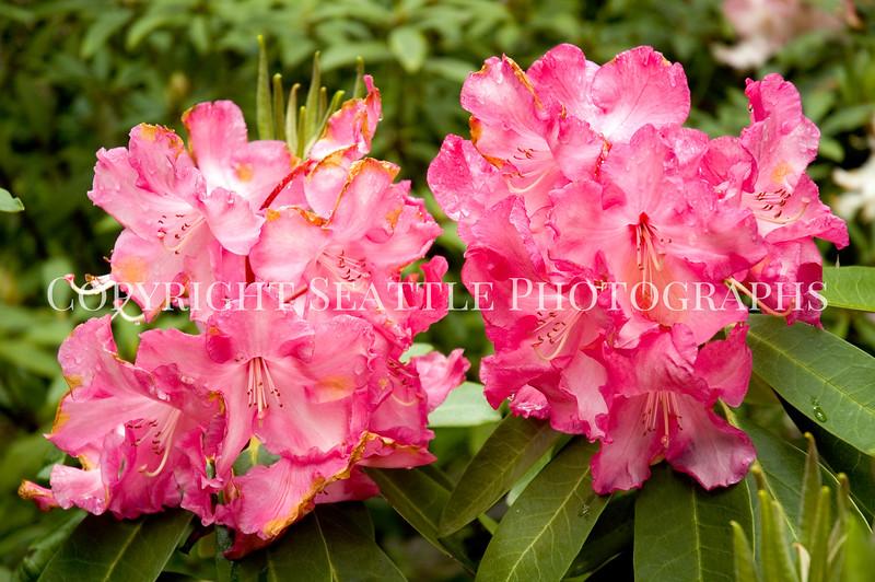 Arboretum Flowers 38
