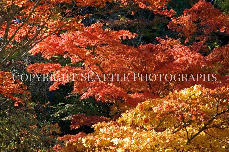 Japanese Garden Trees 5