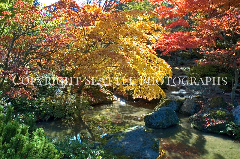 Japanese Garden Creek 5