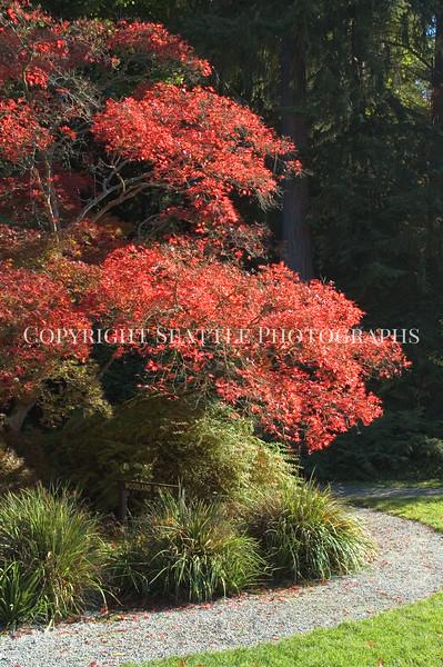 Arboretum Autumn 26