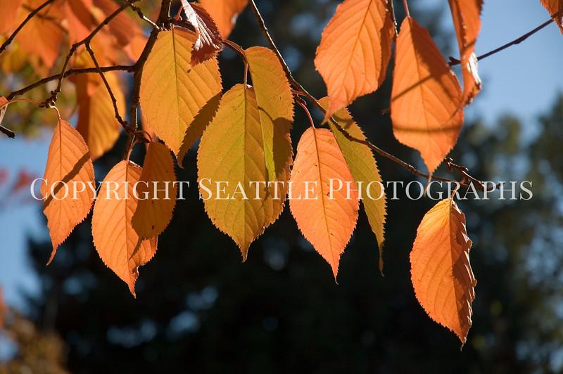 Arboretum Autumn 22