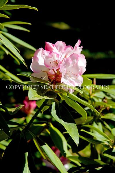 Arboretum Flowers 10
