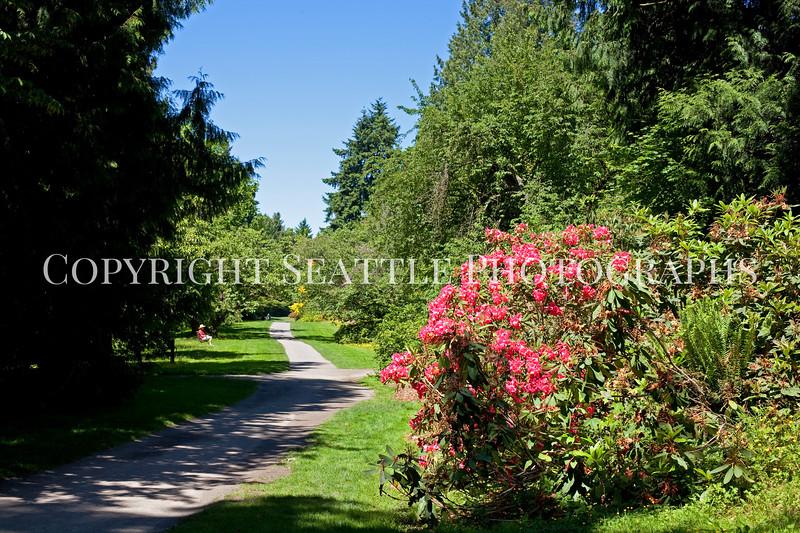 Arboretum Azalea Way 103
