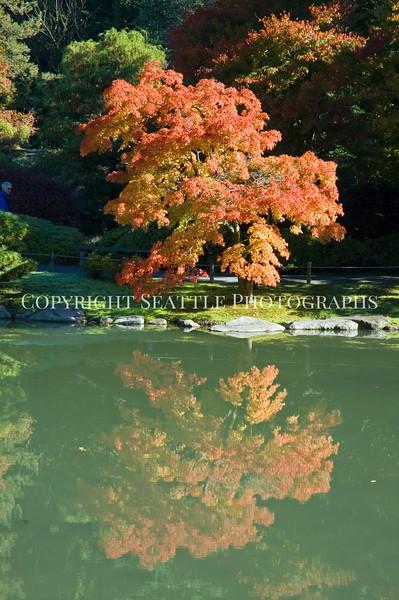 Japanese Garden Lake 11