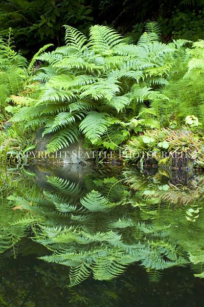 Arboretum Pond 180