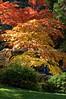 Japanese Garden Trees 4