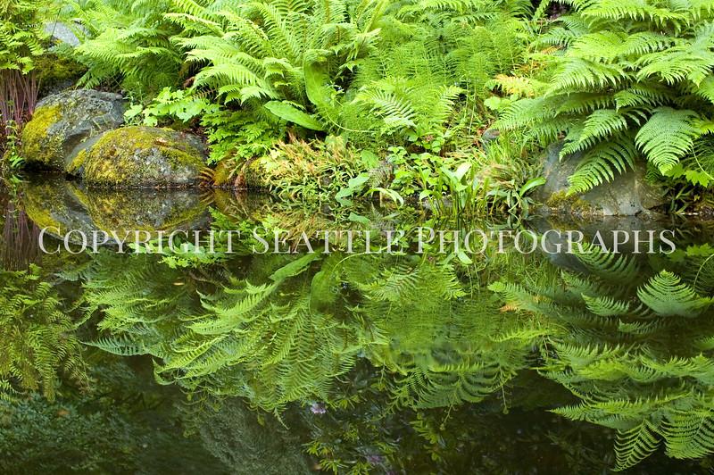 Arboretum Pond 176