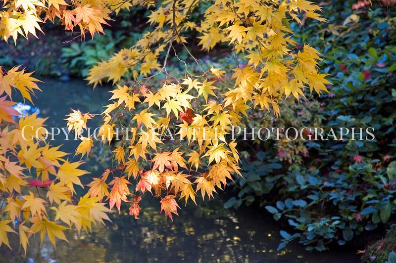 Japanese Garden Creek 8