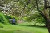 Arboretum Trees 23