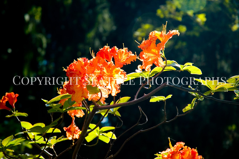 Arboretum Flowers 2
