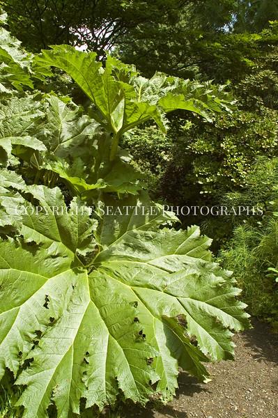 Arboretum Plants 83