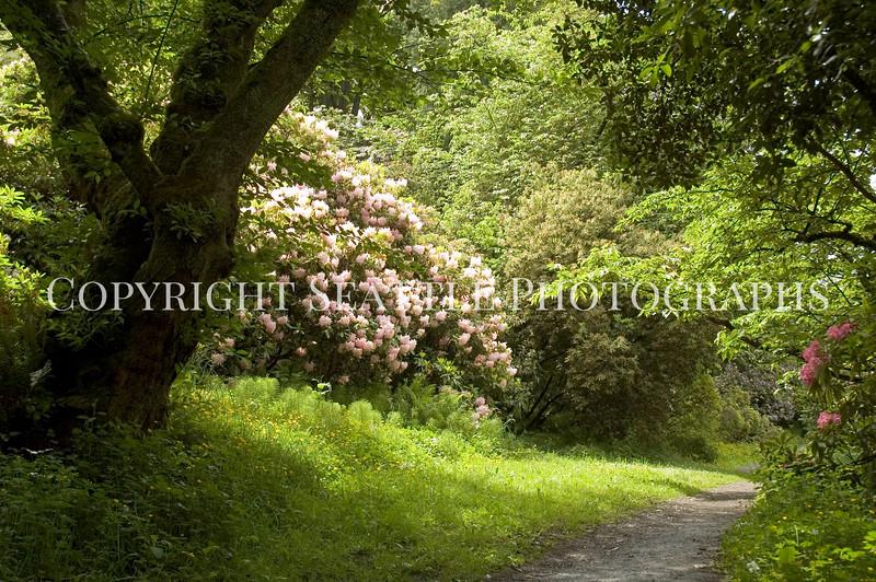 Arboretum Flowers 72