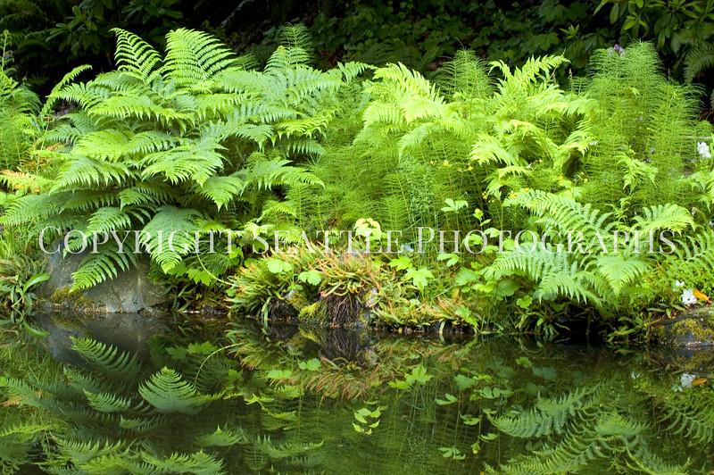 Arboretum Pond 169
