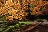 Arboretum Autumn 123