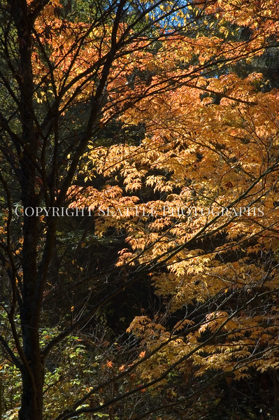 Arboretum Autumn 2