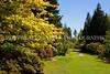 Arboretum Azalea Way 105