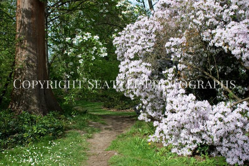 Arboretum Flowers 75