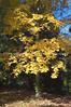 Arboretum Autumn 16