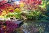 Arboretum Autumn 129