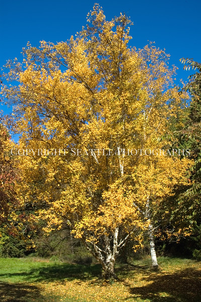 Arboretum Autumn 23