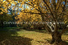 Arboretum Autumn 19
