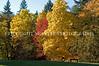 Arboretum Autumn 35
