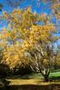Arboretum Autumn 18