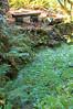 Arboretum Autumn 143
