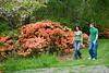 Arboretum Azalea Way 56