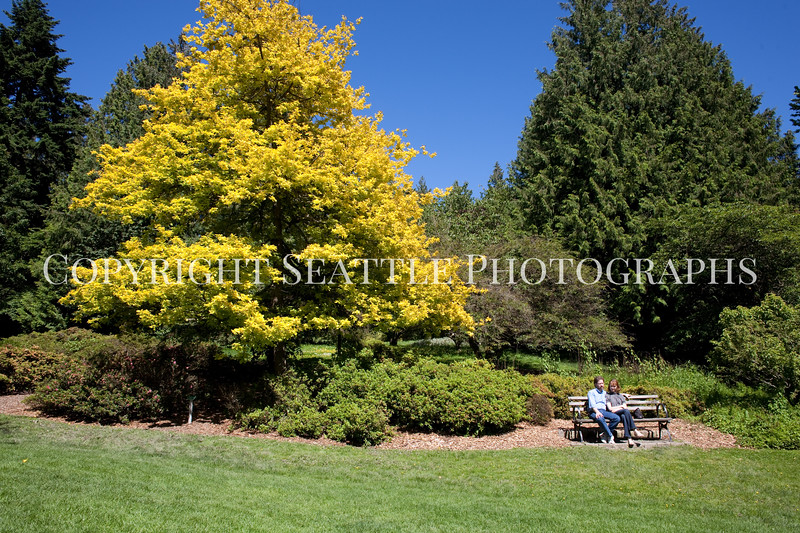 Arboretum Azalea Way 108