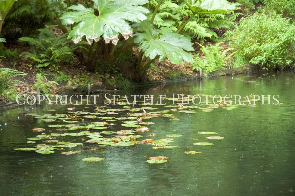 Arboretum Pond 130