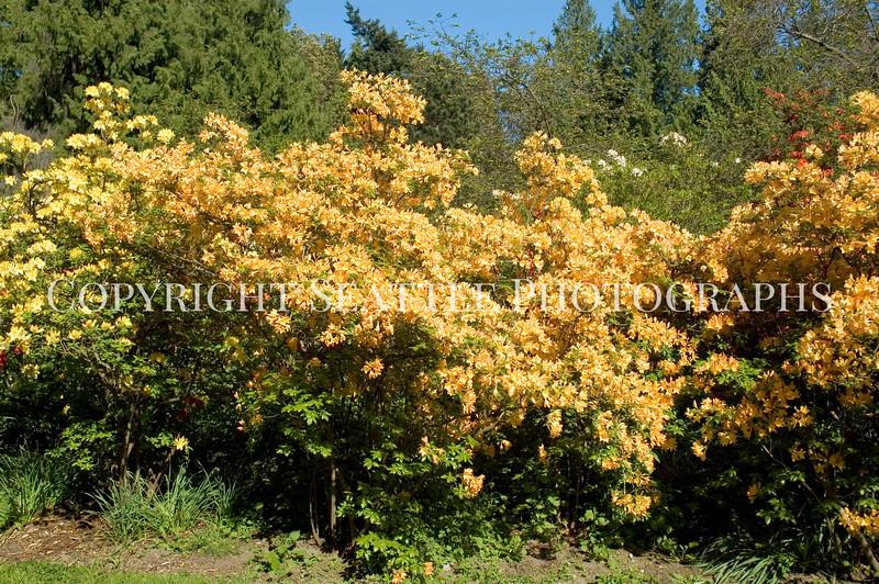 Arboretum Flowers 4