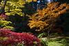 Arboretum Autumn 125
