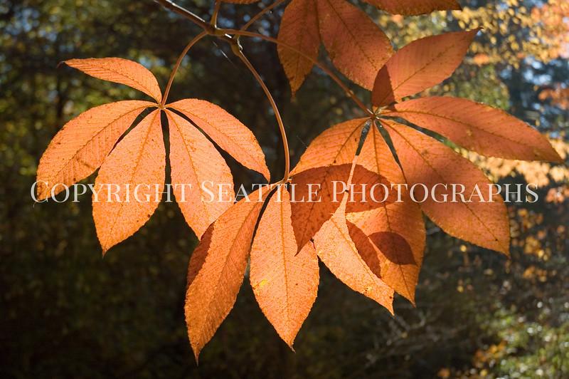 Arboretum Autumn 8