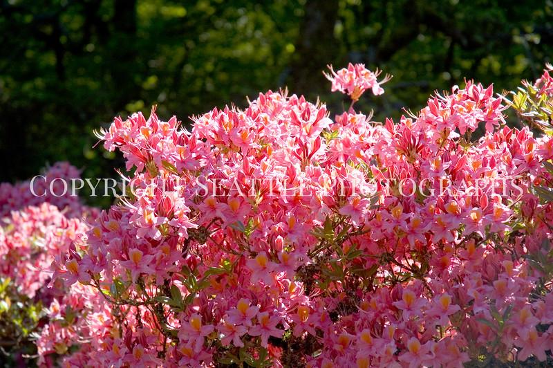 Arboretum Flowers 6