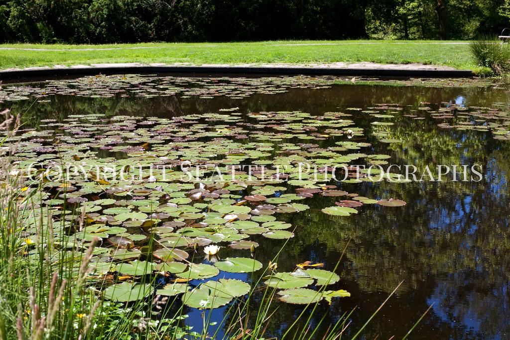 Arboretum Pond 101