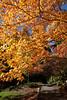 Arboretum Autumn 124